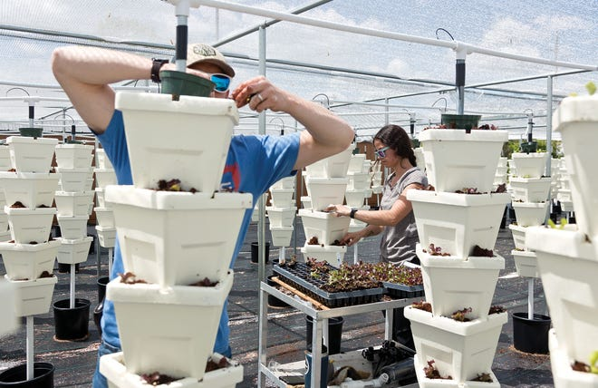 Nate Deitwieler, left, and Jessica Wheeler plant lettuce at the Mid-Ohio Food Collective Farm on the Hilltop