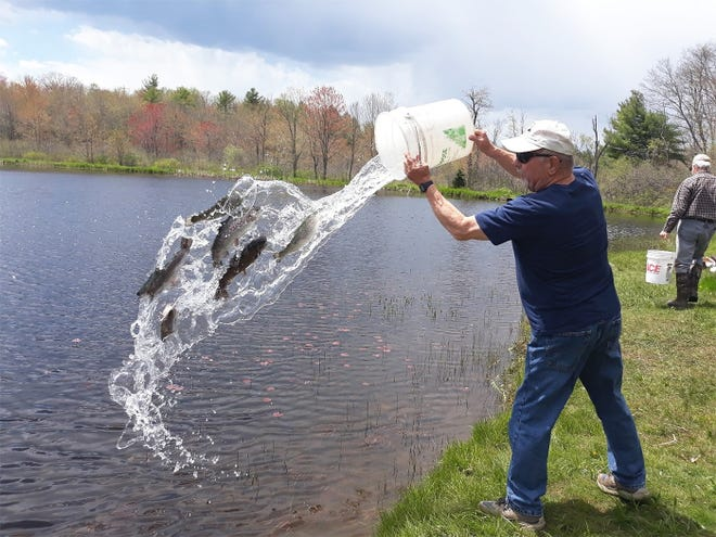 Mike Miller, vice president of the Millers River Trout Unlimited chapter, stocks the pond with various species of trout.