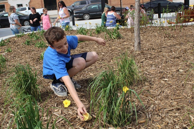 Damian Larson places a yellow rose in the landscape area in Malchow Plaza Wednesday evening.