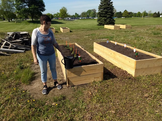 Jacki Corser, ad adjunct culinary arts professor at Monroe County Community College, helps with the start of planting eight raised produce beds at the Student Ag Farm located next to the college Wednesday.