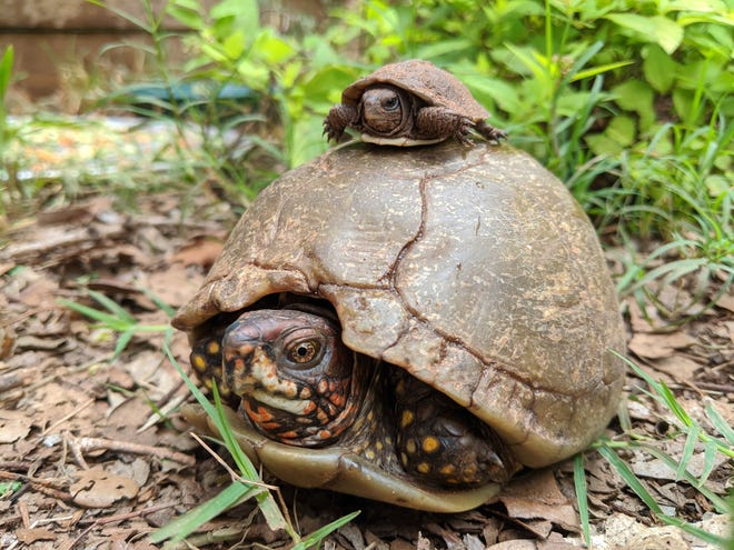 Sunday is World Turtle Day.