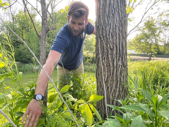 Tyler Butler, executive director with Terradise Nature Center, can spot an invasive plant species off just a quick glance. Throughout his time here, he spends many days pulling these plants, putting together eco-friendly projects and maintaining the landscape.