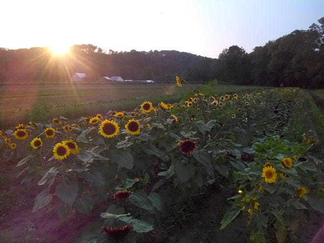 This year'sserieswillbeginJune 2,with a visit to Trauger's Farm Market,a 60-acre, family-owned and operated fruit and vegetable farm located at370 Island Road,inKintnersville.