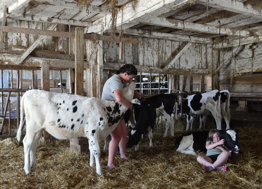 Jess Hoffman of Sunset View Creamery, and visitor AnnaMay Stauffer, 6, interact with cows at the Odessa, N.Y. farm on May 20, 2021.