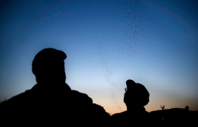 People watch Mexican free-tailed bats emerge from the Selman bat cave near Freedom in 2018.