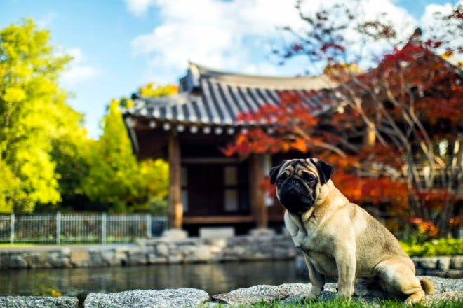 If pet parents are considering a vacation overseas and intend to bring their animal, they should plan for their furry friend far in advance and do ample research.