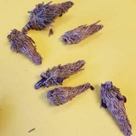 Bag worms