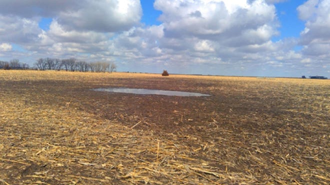 The disputed mud puddle on the Foster's land. Tree stands are seen in the far background.
