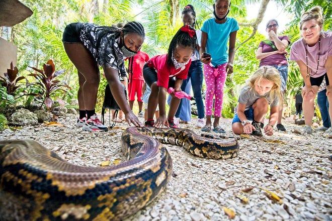 Sarasota Jungle Gardens has opened a new, permanent, Giant Snake exhibit.