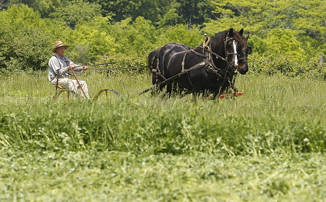 Mike Fuels leads Marcus (left) and Bob, two Percherons, as they cut one of the hay fields at the Slate Run Living Historical Farm, 1375 state Route 674, on May 21. Visitors can see what life was like on a farm in the 1880s as they stroll through gardens, barns and the farmhouse and see costumed volunteers doing chores. The farm is open 9 a.m. to  6 p.m. Tuesdays through Thursdays and Sundays and 9 a.m. to 7 p.m. Fridays and Saturdays. Admission is free.