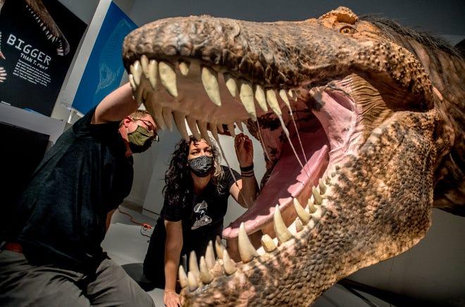 """Peoria Riverfront Müzesi'nde sanat küratörü ve sergilerin direktörü olan solcu Zach Zterberg ve Amerikan Doğa Tarihi Müzesi Yapı Tasarımı Kıdemli Direktörü Emily Vanderbull, 25 Mayıs Salı gününe kadar Rex'in dişlerinden tam boyutta damlayan tükürük üzerinde çalışıyorlar. 2021 için """"T-Rex: nihai avcı,"""" 29 Mayıs'ta Peoria Riverfront Müzesi'nde yeni bir sergi ilk kez dünya turunda."""