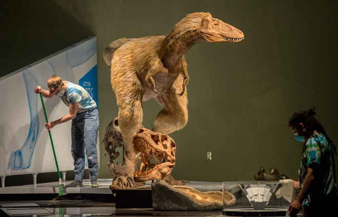 Lucy Rao, solda ve Aryon Boyd, 25 Mayıs 2021 Salı günü Peoria Riverfront Müzesi'nde yeni kurulan bir tyrannosaurus sergisinin etrafını temizliyor.
