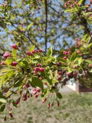 STERLING - With trees, grass and flowers in full bloom, the spring allergy season is in full swing as well.