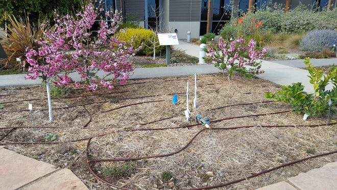 Drip irrigation at the Learning Landscape.
