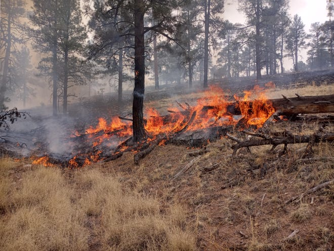 Heavy fuel consumption from the Doagy Fire, burning in the Gila National Forest, May 22, 2021.