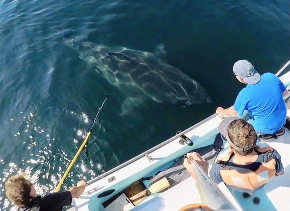 Researchers photograph sharks along California's Central Coast.
