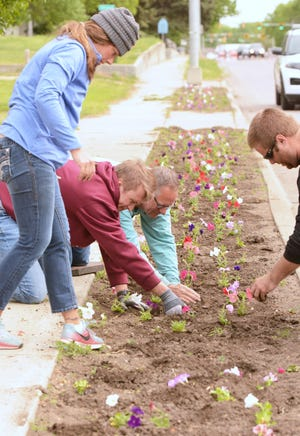 After Jamie Stricker (standing) delivered a batch of petunias, Sam Hulscher (left), Brad Cotten and Matt Brandsrud went about planting the flowers. About two dozen city employees and volunteers did the annual planting on U.S. Highway 81 from First Avenue Southeast to Fifth Avenue Southeast.