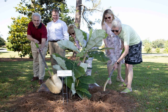 Woodward family members plant a tree at the Robert and Elaine Woodward Heritage Garden ribbon cutting ceremony at the North Florida Research and Education Center (NFREC) in Quincy, Florida on Friday, May 14th, 2021. The tree, an Ashe magnolia, is an endangered flowering tree found only in the Florida Panhandle.