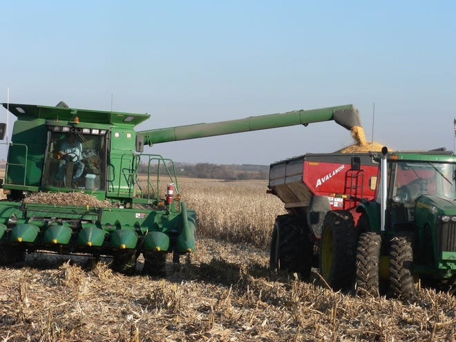 Corn being harvested in this file photo.