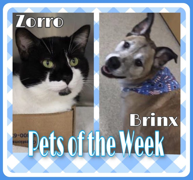 Pets of the Week: Zorro and Brinx