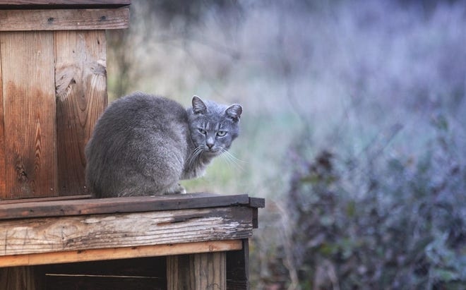 A feral cat is pictured at Riverside Park, where a colony of 20 to 25 cats are living and are fed by volunteers.