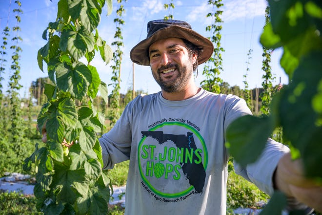 Owner and former Marine Sgt. Sebastien Lajeunesse goes through the hops vines looking to see which ones are ready for their first harvest at St. John Hops in Umatilla in 2020.