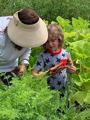 Trent Snelling, 5, whose father is based at Naval Station Mayport, learns about carrots at Beaches Emergency Assistance Ministry's Grace Garden as part of the Greater Jacksonville Area USO's Healthy Military Family Initiative.