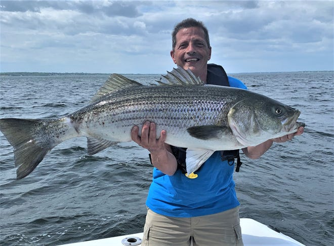 Paul Criscione, of Cranston, with the 44-inch, 35-pound striped bass he caught with Doug and Carol LaFrance live-lining a poggy (Atlantic menhaden) off Prudence Island.