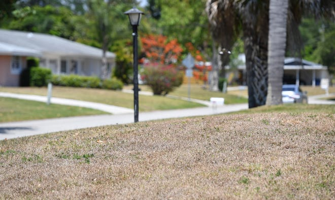 Brown lawns like this one in front of a home in the Southgate neighborhood of Sarasota, are an indication of the dry conditions in Southwest Florida.