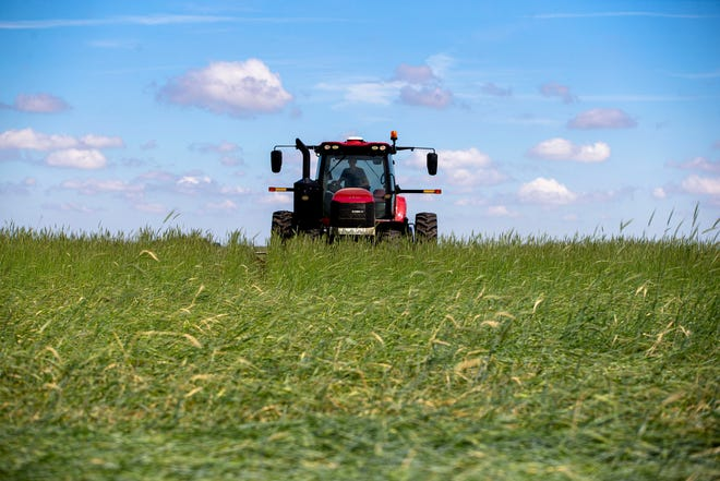 Jace Tarr runs a tractor through a field of rye while pulling a roller crimper on farmland managed by Farmland Solutions in Dawson on Wednesday. The rye serves as a cover crop for organic soybeans that were planted about a week ago within the same ground as the rye. The roller crimper kinks and breaks the rye plants, allowing them to serve as a weed repellent while also benefiting the soil during the rye's lifespan.