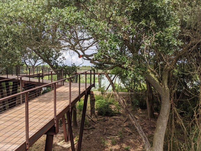 Canopy Walk at High Island