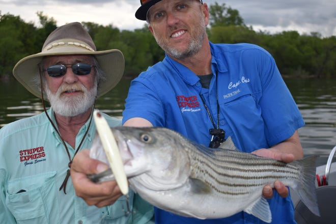 Bill Carey and his son Chris with Striper Express show off one of many stripers landed on topwater plugs last week. The topwater bite is as good as it gets right now at Lake Texoma.