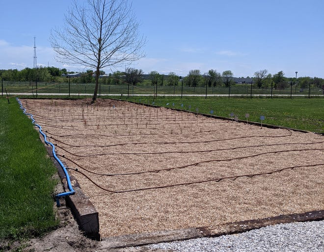 Springfield's Tree City USA committee received a Tree Resource Improvement and Maintenance (TRIM) grant from the Missouri Department of Conservation to install a Missouri Gravel Bed tree nursery at the City nursery facility at Nathanael Greene Park.
