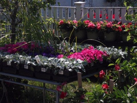 The new garden center at 343 Main St. is a family business collaboration between Michelle Massaad; her husband, Joseph Jean; and Massaad's sister and brother, Noha and Robert Massaad.