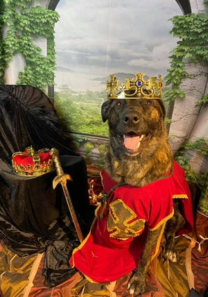 """Animal Care PA, ACPA, will receive a $3,000 donation from Holiday House Pet Resort & Training Center, proceeds raised by the facility through the annual """"Dog Prom"""" held May 14. Donations were contributed by the dog daycare program's clients."""