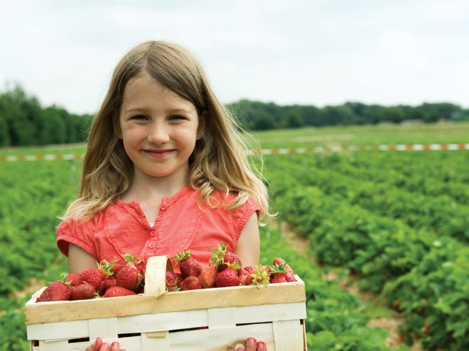 Farms all across the state offer the chance to pick your own berries this season.