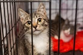 These cats were left in a drop-off cage.