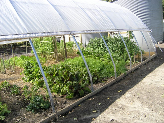 Vegetables thrive in Victoria Olson's high tunnel, which she purchased with the help of an USDA NRCS grant.