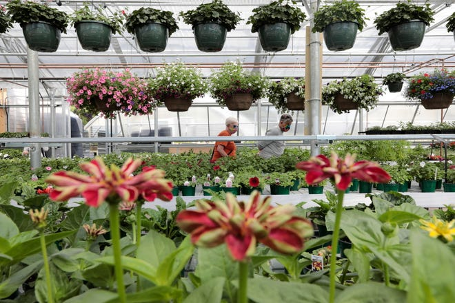 Shoppers look for the perfect flowers inside of the new Lawrence Family Greenhouses greenhouse. on Hathaway Road in New Bedford.