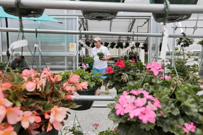 A customer picks some flowers inside the new greenhouse at Lawrence Family Greenhouses on Hathaway Road in New Bedford.