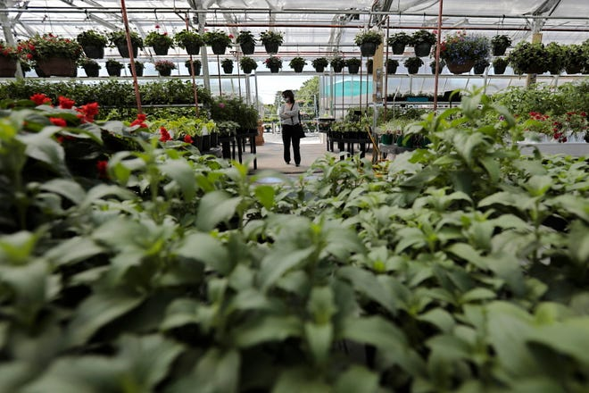 A woman walks into the new Lawrence Family Greenhouses greenhouse, on Hathaway Road in New Bedford.