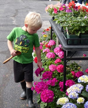 Owen Clady, 3, admires flowers for sale atNancy Kochel's booth during the Dutchtown Farmers Market in New Washington on Thursday afternoon.