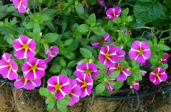 Container gardening ideas can be seen on the Garden Walk.