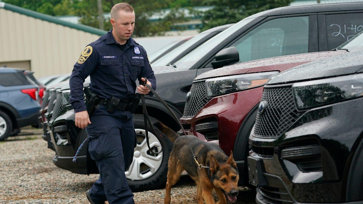 Marijuana legalization prompting police K-9 retirements 3