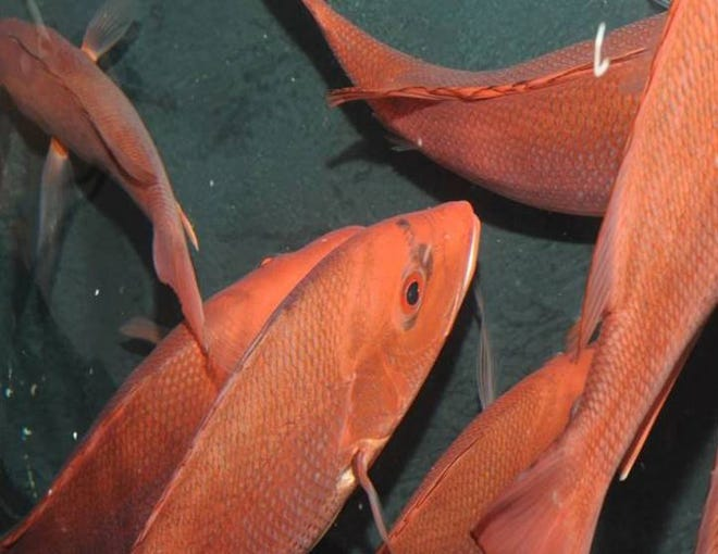 Make Your Catch Count, Download iSnapper for this Red Snapper Season