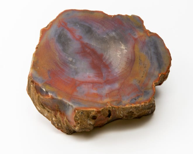 """Fossilized wood, an Out of the Attic item, is shown at the Des Moines County Heritage Center, 504 N. Fourth St., in Burlington. The fossil was brought to Burlington from Arizona by Charles E. Perkins, who displayed it in his """"Cabinet of Curiosity"""" alongside other items he discovered during his travels."""