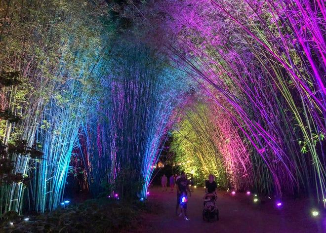 IllumiZoo lights up the Jacksonville Zoo & Gardens every Friday night this summer.