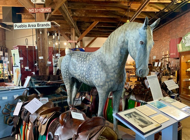 Lucky the horse is on display at the Southern Colorado Heritage Museum along with saddles from local saddle companies