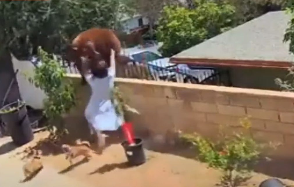 Teen shoves bear that swatted family dog in California yard 2