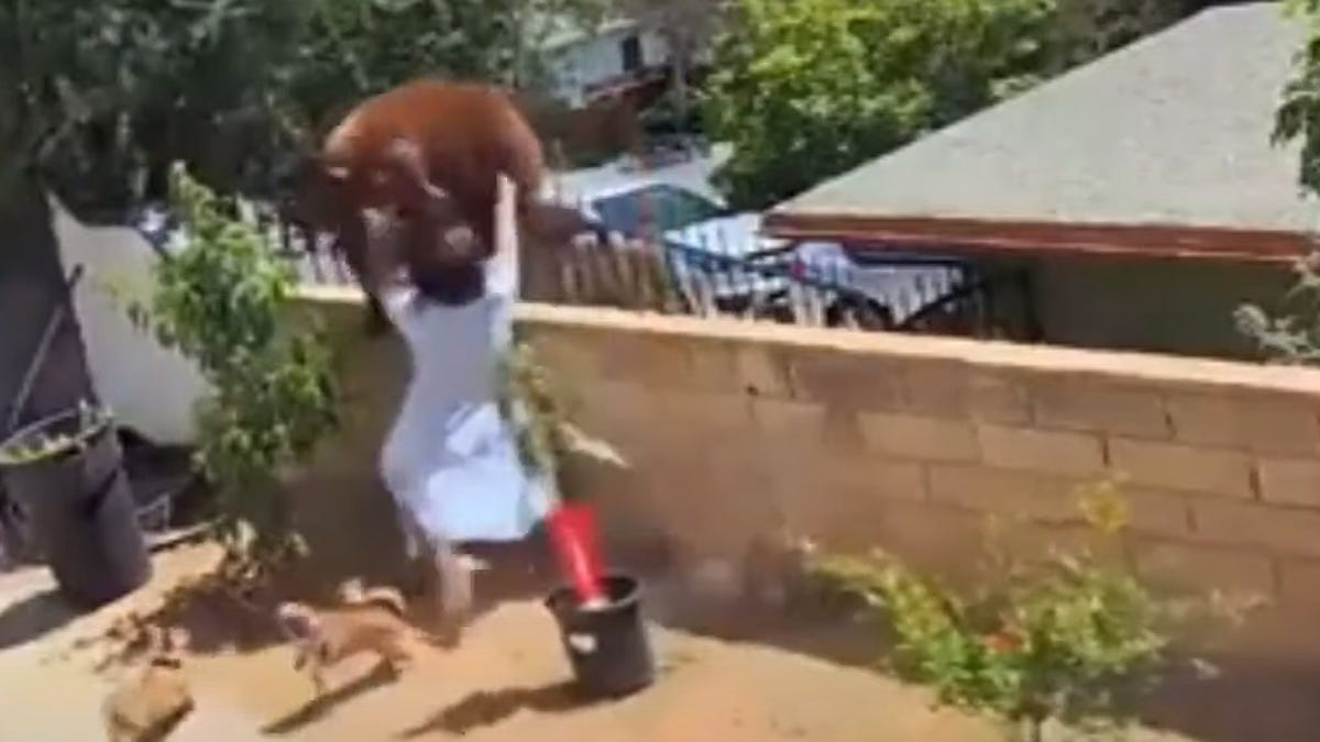 Teen shoves bear that swatted family dog in California yard 3